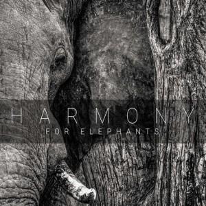 Harmony 300